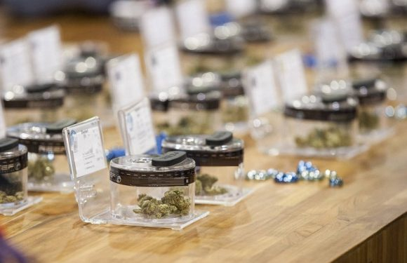 Las Vegas Is Earning Reputation with the Best of Vegas strip Dispensary